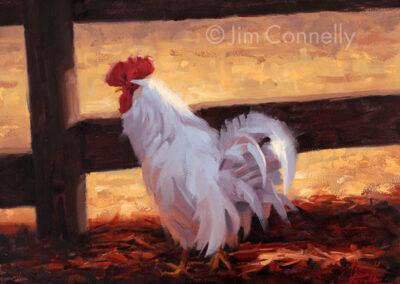 Chicken and Light